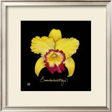 Vivid Orchid VII Poster by Ginny Joyner