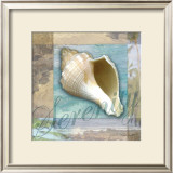 Serenity Shell Prints by Todd Williams