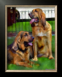 Bloodhounds Prints by Robert Mcclintock