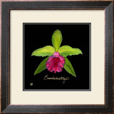 Vivid Orchid I Poster by Ginny Joyner
