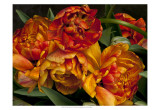 Old World Tulips I Prints by Rachel Perry