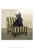 Scottie on Stripes Print by Carol Dillon