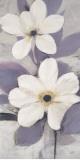 Lavender Japanese Anemone II Print by  Ivo