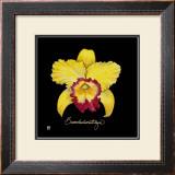 Vivid Orchid VII Art by Ginny Joyner