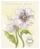 Claire's Garden Poppy Posters by Elissa Della-piana