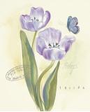 Claire's Garden Tulip Poster by Elissa Della-piana