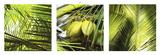 Philip Plisson - Palm Leaves Obrazy