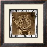 Tiger Views Prints by Susann & Frank Parker