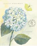 Claire's Garden Hydrangea Print by Elissa Della-piana