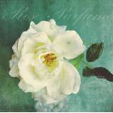 Luscious Petals Print by Cristin Atria