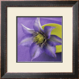 Clematis and Bowl Prints by Catherine Beyler