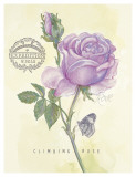 Claire's Garden Rose Prints by Elissa Della-piana