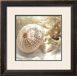 Coral Shell I Posters by Donna Geissler