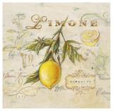 Tuscan Lemon Prints by Angela Staehling
