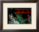 Shrine Foxes, Japan Framed Giclee Print by Petra Wels