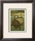 Pond Turtles Posters by Louis Prang