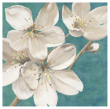 Blossom Bounty Posters by Jurgen Gottschlag