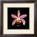 Vivid Orchid III Print by Ginny Joyner