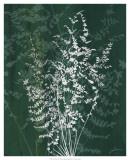 Jewel Ferns II Prints by James Burghardt