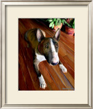 Bull Terrier Down Posters by Robert Mcclintock
