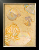 Shoreline Shells VI Posters by Lorraine Vail