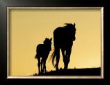 Two Mustangs Posters by  Klein & Hubert
