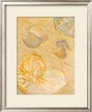 Shoreline Shells VI Poster by Lorraine Vail