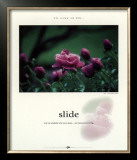 Slide Print by Francis Pelletier