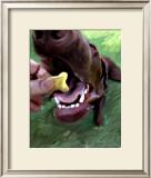 Dog Bite Posters by Robert Mcclintock