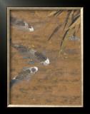 Gilded Calm Prints by Jurgen Gottschlag