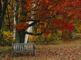 Empty Bench under Maple Tree, Twin Ponds Farm, West River Valley, Vermont, USA Photographic Print by Scott T. Smith