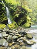 Seasonal Waterfall Near Graves Creek, Olympic National Park, Washington, USA Photographic Print by Stuart Westmoreland