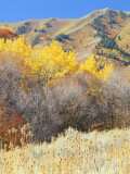 Forest in Autumn, Wellsville Mountains, Wasatch-Cache National Forest, Utah, USA Photographic Print by Scott T. Smith