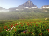 Indian Paintbrush in the Fog at Logan Pass in Glacier National Park, Montana, USA Photographic Print by Chuck Haney