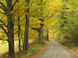 Country Road Passing by Autumn Trees, New England, USA Photographic Print by Walter Bibikow