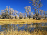 Reflections of Trees and Rushes in River, Bear River, Evanston, Wyoming, USA Photographic Print by Scott T. Smith