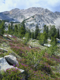 Scott T. Smith - Wildflowers on Patterson Peak, Challis National Forest, Sawtooth Recreation Area, Idaho, USA - Fotografik Baskı