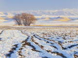 Plowed Field and Willows in Winter, Bear River Range, Cache Valley, Great Basin, Utah, USA Photographic Print by Scott T. Smith