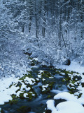 Spring-Fed Creek in Winter, Wasatch-Catch National Forest, Utah, USA Photographic Print by Scott T. Smith