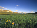 Wildflowers Along Rocky Mountain Front Near Browning, Montana, USA Photographic Print by Chuck Haney