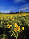 Balsamroot Along the Rocky Mountain Front, Waterton Lakes National Park, Alberta, Canada Photographic Print by Chuck Haney