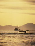 View of Humpback Whale Tail and Fishing Boat, Inside Passage, Alaska, USA Photographic Print by Stuart Westmoreland