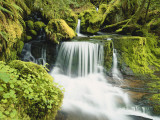 Waterfall in Willamette National Forest, Oregon, USA Photographic Print by Stuart Westmoreland