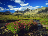 Monkeyflowers at Logan Pass in Glacier National Park, Montana, USA Stampa fotografica di Chuck Haney