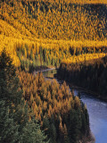 Autumn Larch Trees Along the North Fork Flathead River in Montana, USA Photographic Print by Chuck Haney