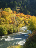 Maples and Birches Along Blacksmith Fork River, Wasatch-Cache National Forest, Utah, USA Photographic Print by Scott T. Smith