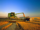 Farmer Unloading Wheat from Combine Near Colfax, Washington, USA Photographic Print by Chuck Haney