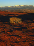 La Sal Mountains in Background, Canyon Rims, Canyonlands National Park, Colorado Plateau, Utah, USA Photographic Print by Scott T. Smith