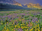 Meadow of Wildflowers in the Many Glacier Valley of Glacier National Park, Montana, USA Photographic Print by Chuck Haney