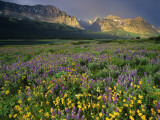 Prairie Wildflowers Near Lake Sherburne, Many Glacier Valley, Glacier National Park, Montana, USA Photographic Print by Chuck Haney